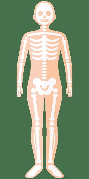 تراکم استخوان - اسکلت بدن